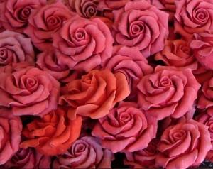 rose-21191_640